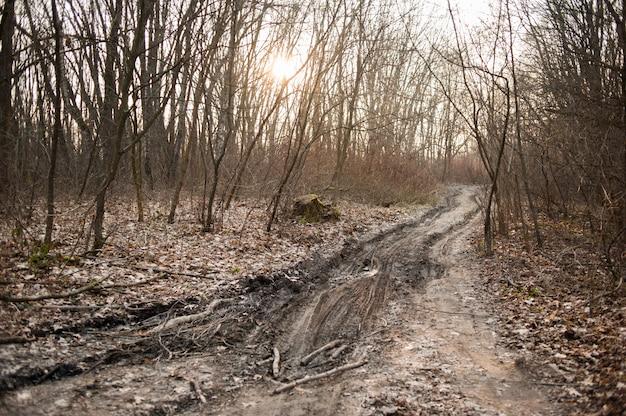Сухой лес с растительностью ранней весной Premium Фотографии