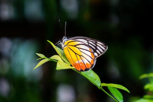 木の美しい蝶 Premium写真
