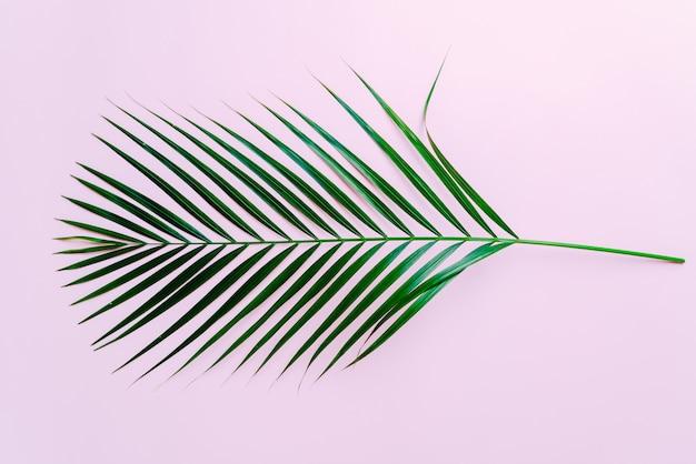 コピースペースを持つ熱帯のヤシの葉 Premium写真