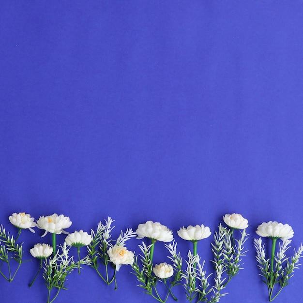 鮮やかなカラフルな花の背景 無料写真