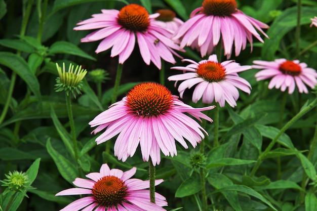 アメリカ合衆国、ニューヨーク市の花 Premium写真