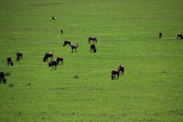 Сафари в кении и танзании, африке Premium Фотографии