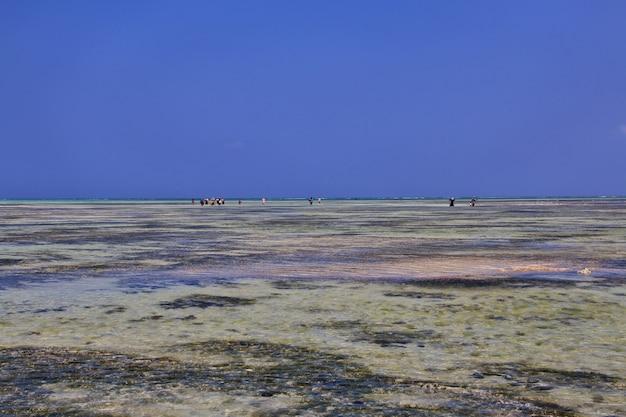 Отлив на занзибаре, индийский океан Premium Фотографии