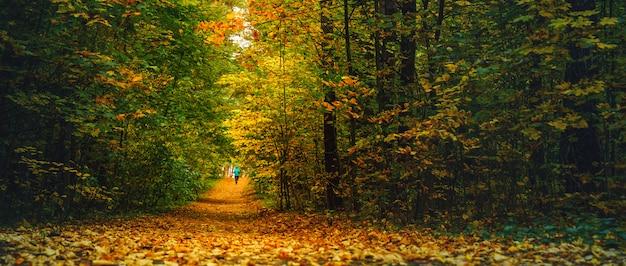 秋の森を走る女性アスリート。落ち葉が散らばる素晴らしい秋の森でジョギング Premium写真