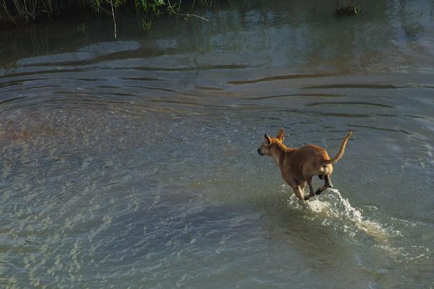 乾燥した土地に水を流している犬 無料写真