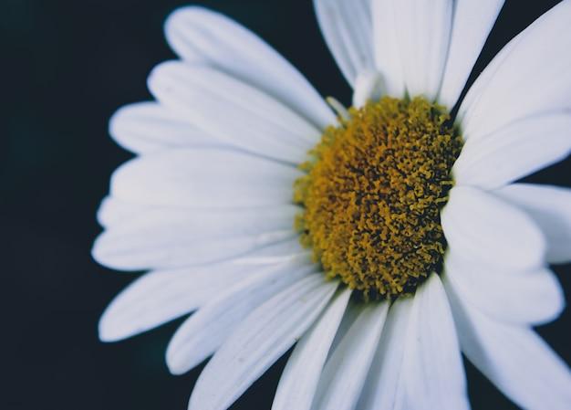 白い花を閉じます 無料写真