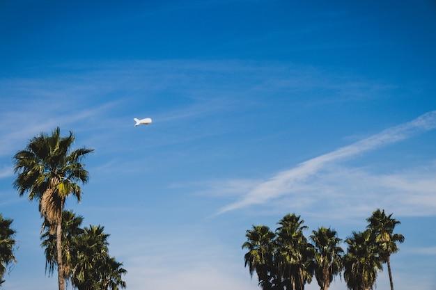 Пальма с дирижаблем в фоновом режиме Premium Фотографии