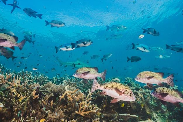 この地域は、臨海の生物多様性に恵まれています 無料写真