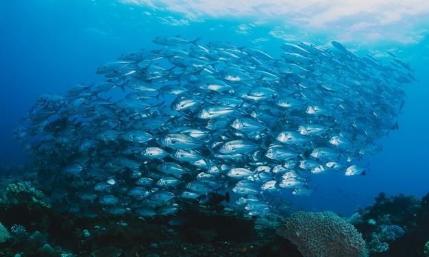 水中の魚の群れ 無料写真