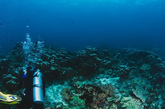 スキューバダイバーサンゴ礁を探索 無料写真