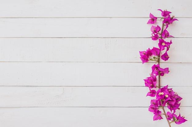 白い木の背景にピンクの花。フラットレイ、上面図 無料写真