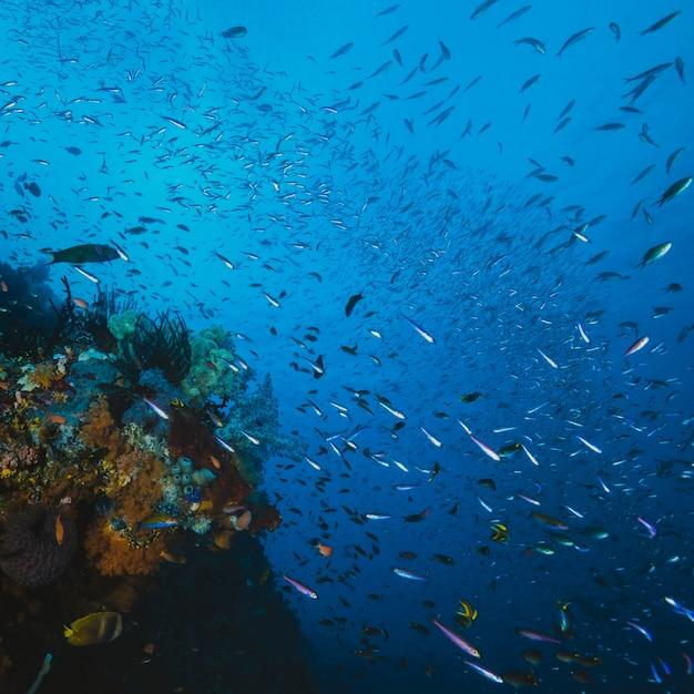魚と珊瑚 無料写真