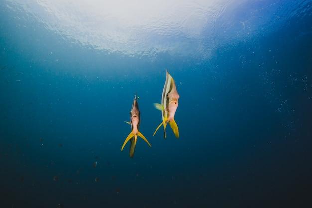 Мелководье бабочек в пустом океане Бесплатные Фотографии