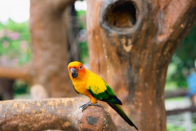 Желтый попугай птица, солнце бутафорское. Premium Фотографии