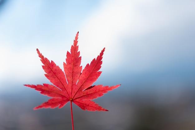 カラフルな秋の葉の季節 Premium写真