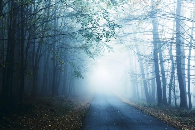Дорога и туманный лес осенью. Premium Фотографии