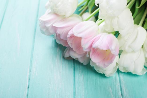 Розовые и белые очень нежные тюльпаны на зеленом синем деревянном фоне Premium Фотографии