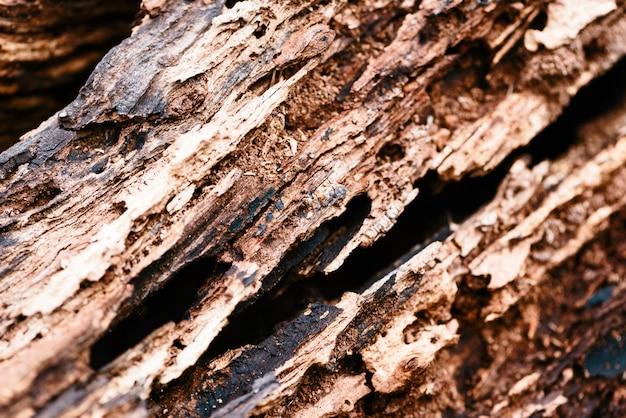古い腐った木のクローズアップ。 Premium写真