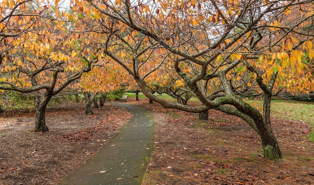 桜の木の庭の空の歩道 Premium写真
