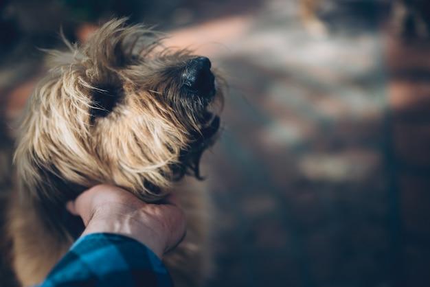 Мужчины гладят собаку Premium Фотографии