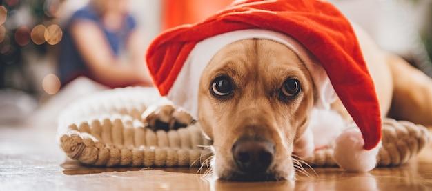 枕の上に敷設サンタ帽子をかぶっている犬 Premium写真