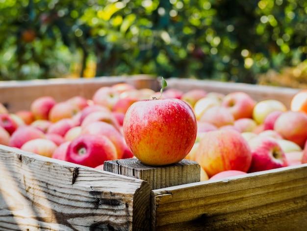 Красное яблоко на деревянном поддоне в поле яблонь Premium Фотографии