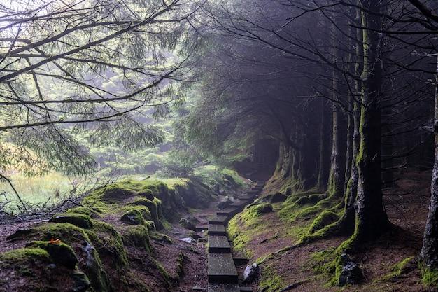 Темный путь с деревьями без листьев и небольшим количеством тумана в пути уиклоу. Premium Фотографии