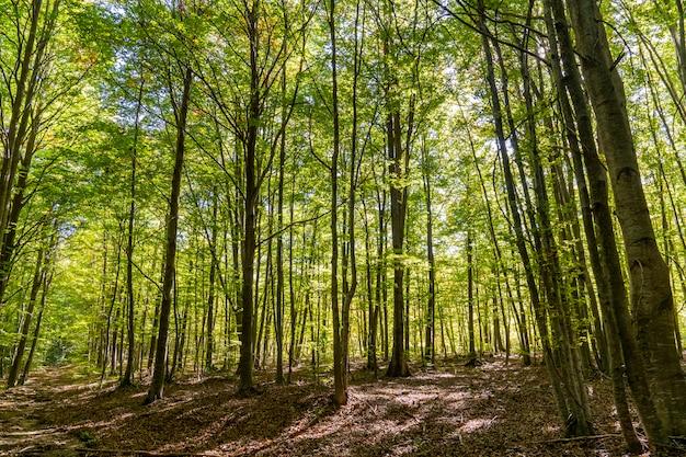 秋のモンセニーの自然公園。 Premium写真