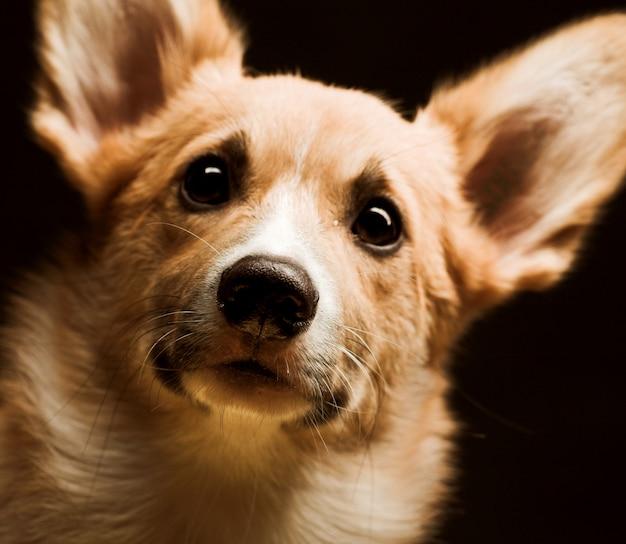 子犬をクローズアップ Premium写真