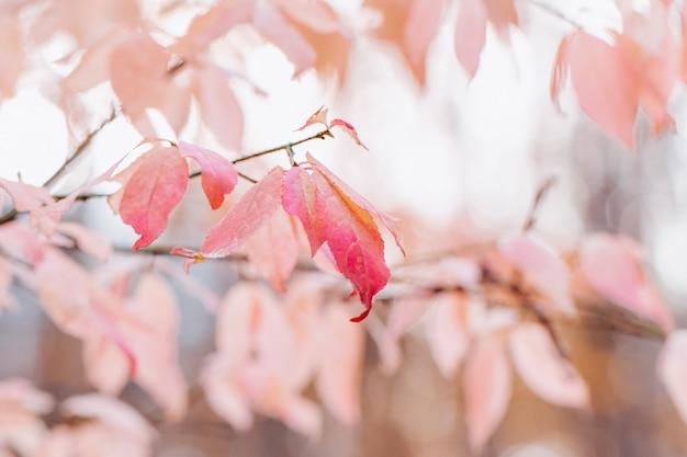 ぼやけた背景にピンクの葉 Premium写真