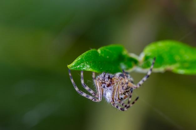 その自然環境でハエトリグモ。 Premium写真