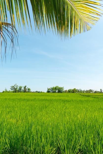Райское поле на бали Бесплатные Фотографии