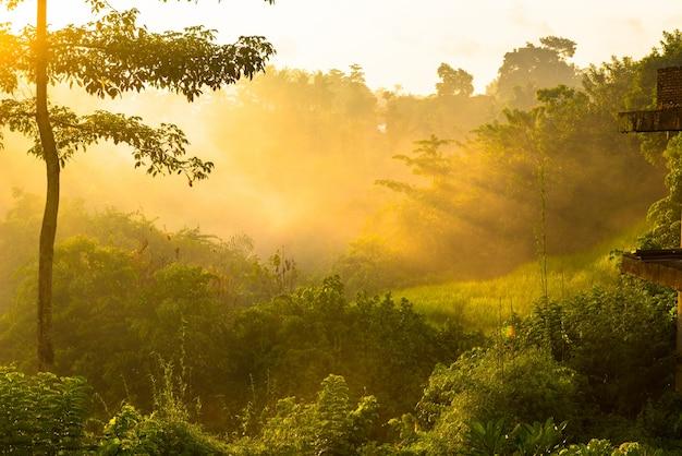 日の出ジャングル 無料写真