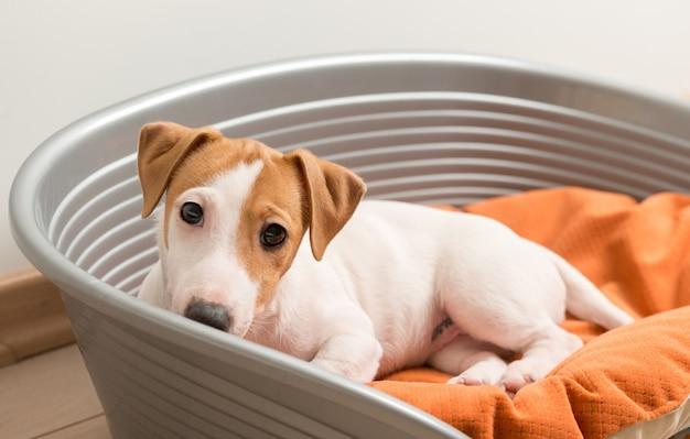 犬のベッドに横たわっているジャック・ラッセル・テリア 無料写真