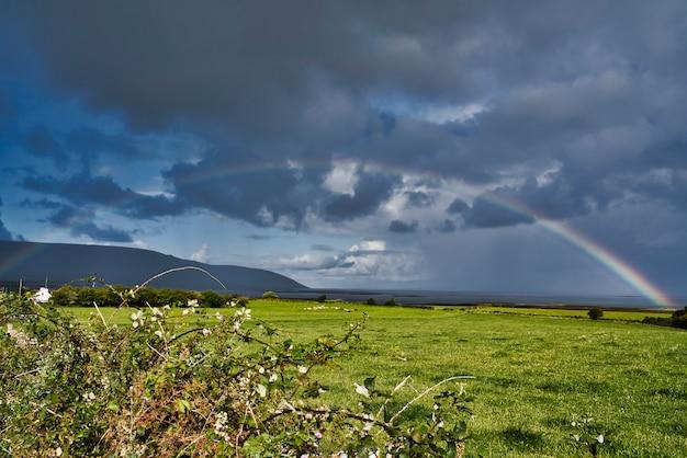 Красивая радуга над плоским пастбищем Premium Фотографии