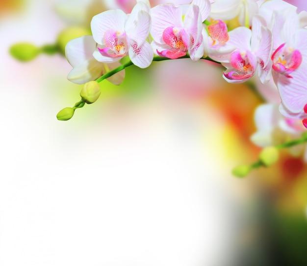 Фон цветы орхидеи Premium Фотографии