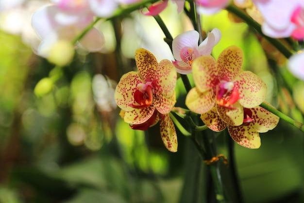 Орхидеи весенние цветы фон Premium Фотографии