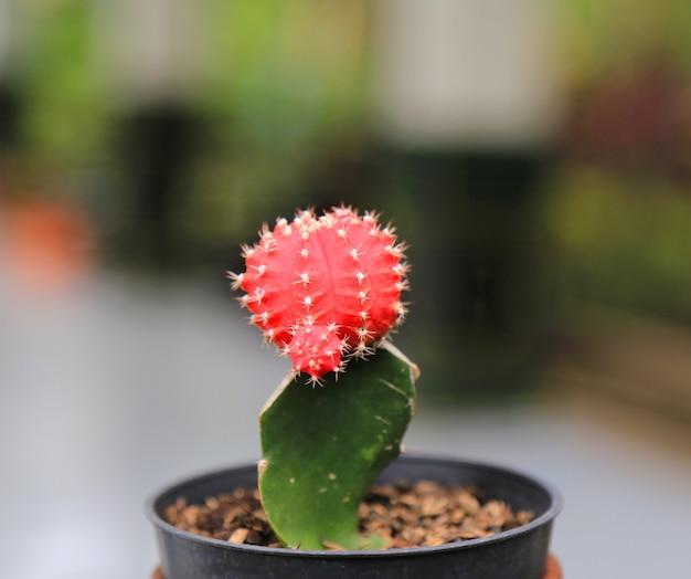 Весенний кактус фон Premium Фотографии