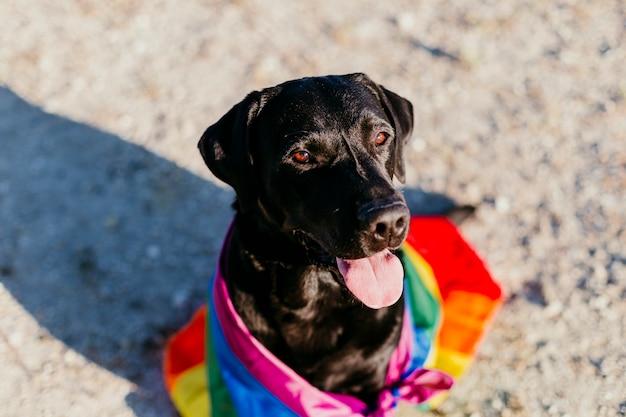 カラフルなレインボーゲイフラグとかわいい面白い黒ラブラドール犬。 Premium写真