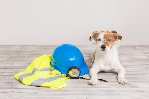 保護具付きのかわいい小型犬 Premium写真