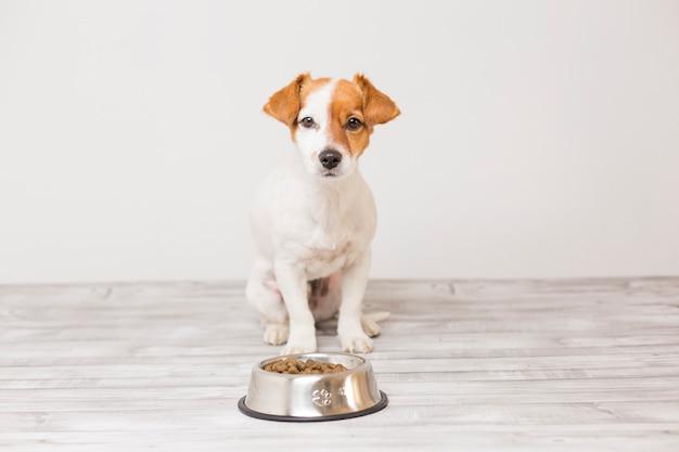 Милая маленькая собака сидит и ждет, чтобы съесть свою миску собачьей еды Premium Фотографии