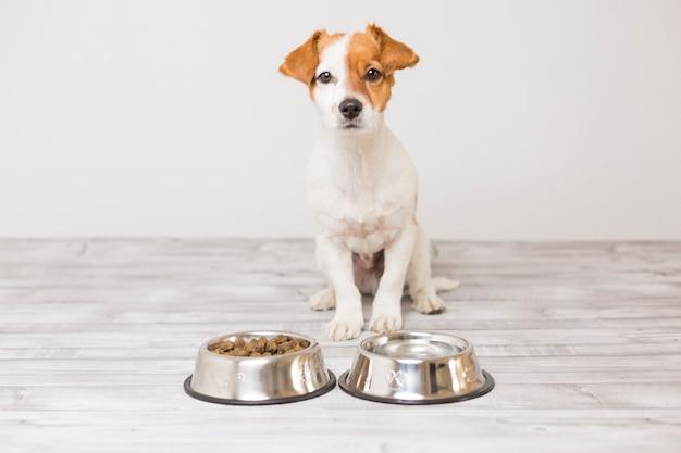 座って、ドッグフードの彼のボールを食べるのを待っているかわいい小さな犬 Premium写真