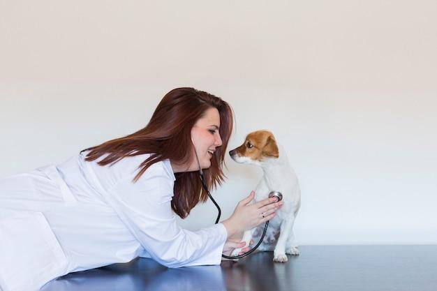 Портрет молодой ветеринарной женщины рассматривая милую малую собаку путем использование стетоскопа, изолированный на белой предпосылке. в помещении Premium Фотографии