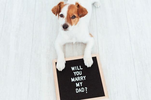 文字板とリングでかわいい犬。結婚式のコンセプト Premium写真