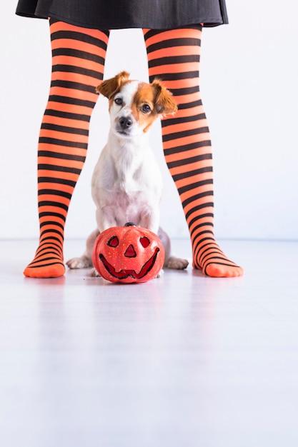 床に座っている犬のほかにカボチャと彼女の所有者。黒とオレンジのタイツを着ている女性。ハロウィーンのコンセプト。屋内でのライフスタイル Premium写真