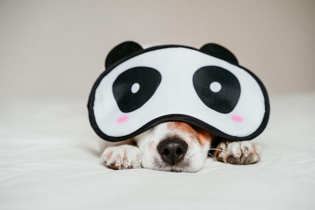 かわいい小さなジャックラッセル犬がベッドに横たわって、面白いパンダ睡眠マスクを着て Premium写真