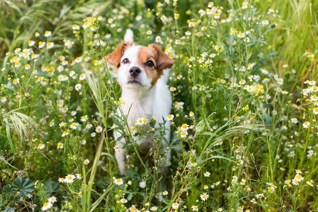 花と緑の草の中でかわいい小さな若い犬。春。動物のコンセプトが大好きです。ペット。 Premium写真