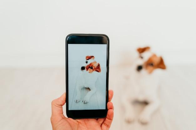 認識できない女性が自宅でかわいいジャックラッセル犬の携帯電話で写真を撮る。技術とペットのコンセプト Premium写真