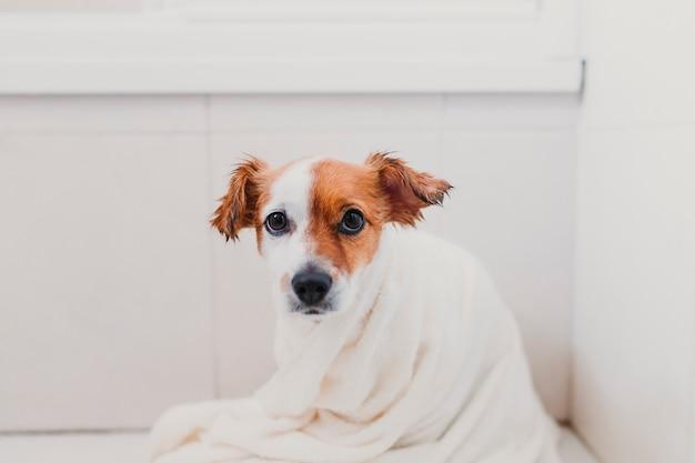 バスタブに濡れたかわいい素敵な小型犬。彼女の犬を自宅で乾燥させる若い女性の所有者 Premium写真