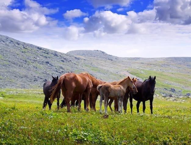 馬の群れと山の風景 無料写真